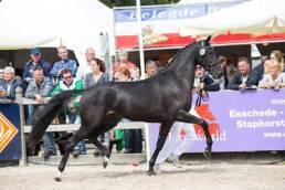 Gaby op de 8e plaats op de Nationale Merriekeuring in Ermelo.