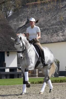 Het Haarbosch is een privé-stal met dressuurpaarden in Stroe