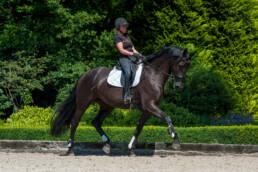 Paarden op Het Haarbosch worden opgeleid tot dressuurpaard